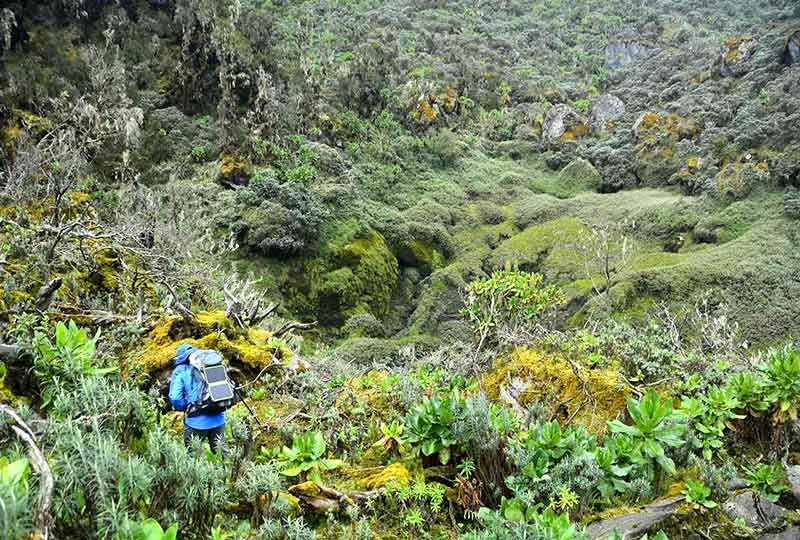 A hiker in the Rwenzori Mountains National Park. The park is very rich in plant and animal diversity+Uganda+travel_with+Kwez+Outdoors